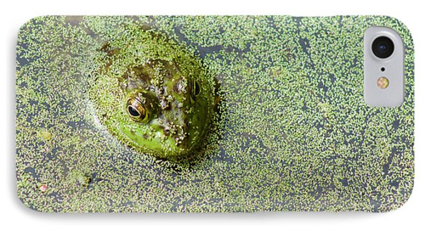 American Bullfrog IPhone Case by Sean Griffin