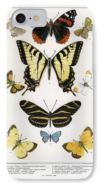 American Butterflies IPhone Case by Julius Bien