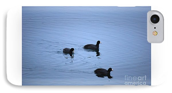 American Coots 20120316_39a IPhone Case by Tina Hopkins