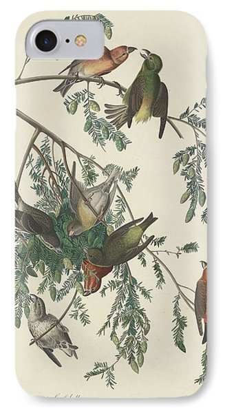 American Crossbill IPhone 7 Case by Rob Dreyer