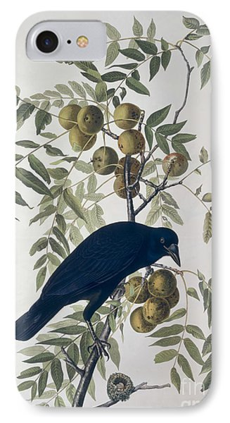 American Crow IPhone Case by John James Audubon