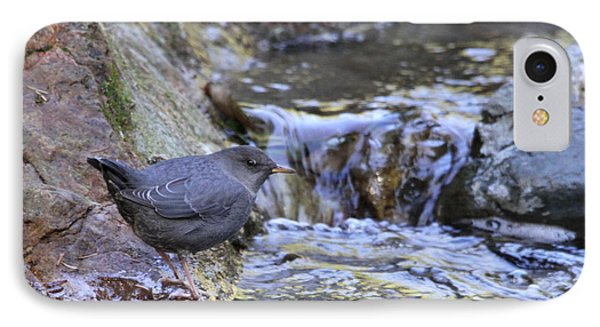 American Dipper IPhone Case by Angie Vogel