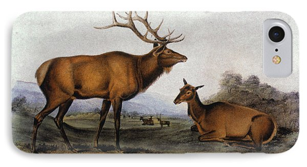 American Elk, 1846 Phone Case by Granger