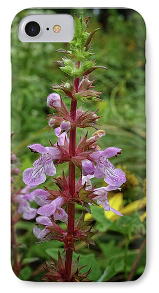 IPhone Case featuring the photograph American Germander by Scott Kingery