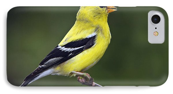 IPhone Case featuring the photograph American Golden Finch by William Lee