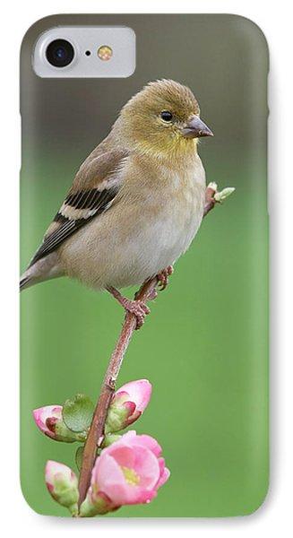 American Goldfinch Phone Case by Doug Herr