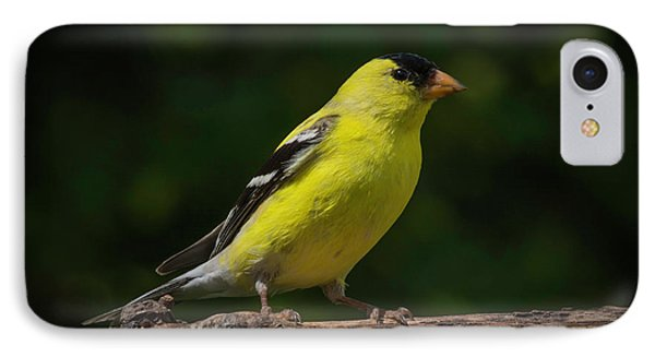 American Goldfinch Male IPhone Case by Kenneth Cole