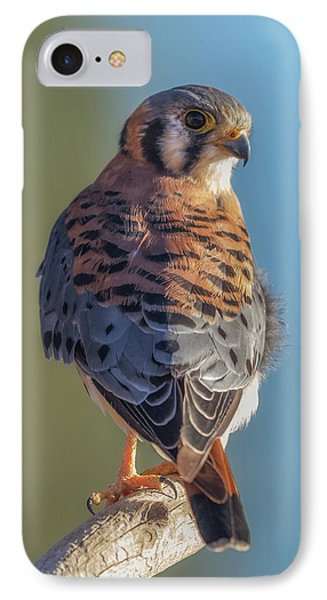 IPhone Case featuring the photograph American Kestrel 3 by Angie Vogel