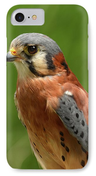 IPhone Case featuring the photograph American Kestrel by Ann Bridges