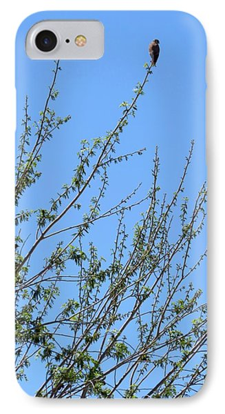 American Kestrel Atop Pecan Tree IPhone Case