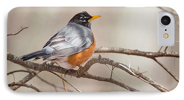 American Robin IPhone Case by Bill Wakeley