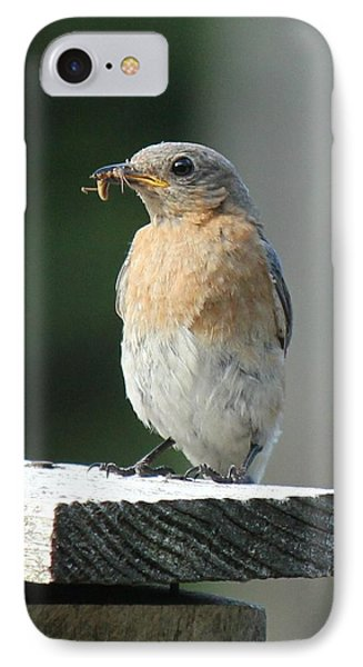 IPhone Case featuring the photograph American Robin by Charles and Melisa Morrison