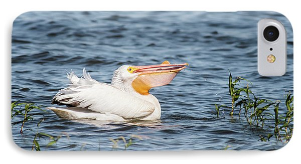 American White Pelican Male IPhone Case by Robert Frederick