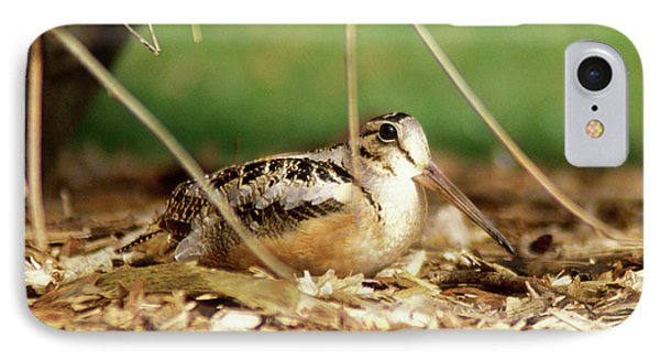 American Woodcock IPhone Case by John Burk