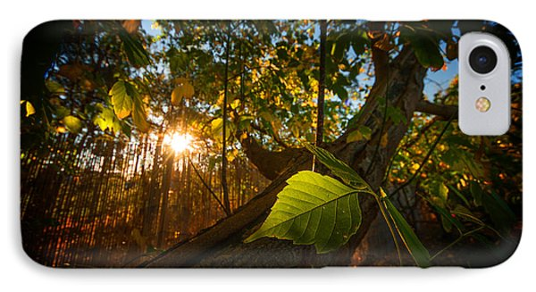 Amongst The Fall IPhone Case by Tim Nichols