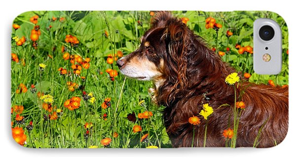 IPhone Case featuring the photograph An Aussie's Thoughtful Moment by Debbie Oppermann