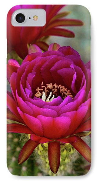 IPhone Case featuring the photograph An Inner Beauty by Saija Lehtonen
