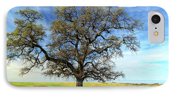 IPhone Case featuring the photograph An Oak In Spring by James Eddy