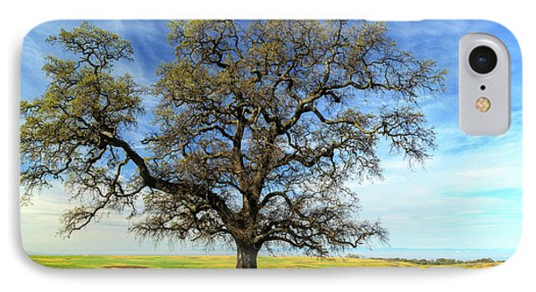 An Oak In Spring IPhone Case by James Eddy