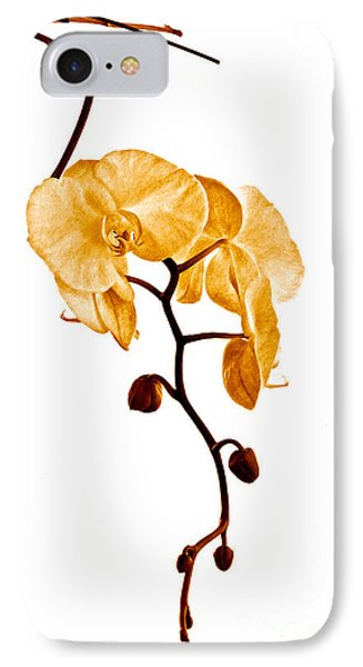 An Orchid's Perfume Phone Case by Gwyn Newcombe