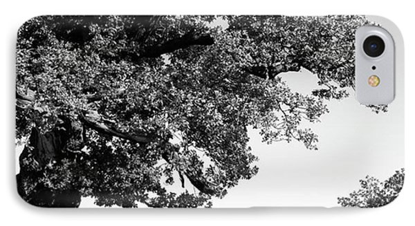 Ancient Oak, Bradgate Park IPhone Case
