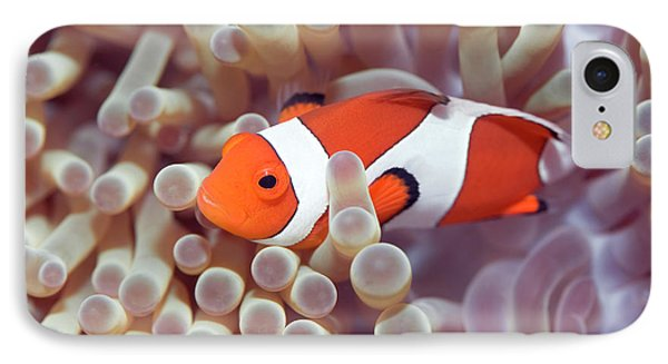 Anemone And Clown-fish Phone Case by MotHaiBaPhoto Prints