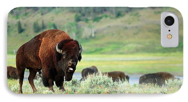 Angry Buffalo IPhone Case by Todd Klassy