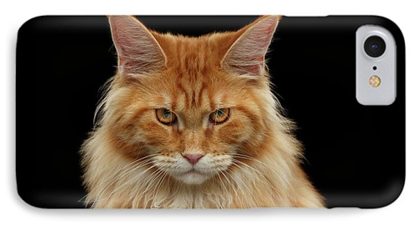 Angry Ginger Maine Coon Cat Gazing On Black Background IPhone Case by Sergey Taran