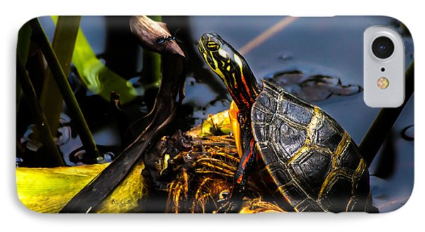 Ant Meets Turtle IPhone Case by Bob Orsillo