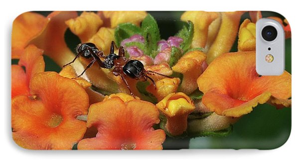 IPhone Case featuring the photograph Ant On Plant  by Richard Rizzo