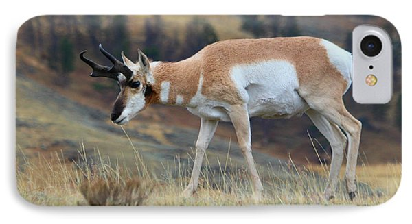 IPhone Case featuring the photograph Antelope by Irina Hays