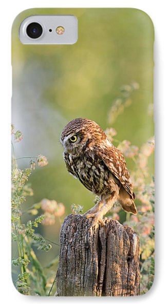 Anticipation - Little Owl Staring At Its Prey IPhone Case