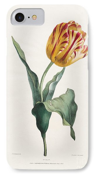 Antique Tulip Print IPhone Case by Valentine Bartholomew