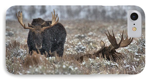 IPhone Case featuring the photograph Antlers In The Brush by Adam Jewell