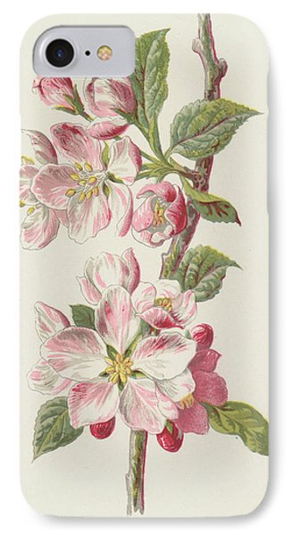 Apple Blossom IPhone Case by Frederick Edward Hulme