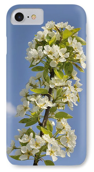 Apple Blossom In Spring Phone Case by Matthias Hauser