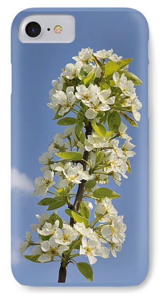 Apple Blossom In Spring IPhone Case by Matthias Hauser