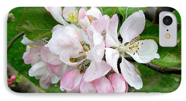 Apple Blossom Phone Case by Joyce Woodhouse