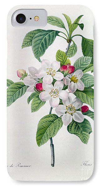 Apple Blossom IPhone Case by Pierre Joseph Redoute