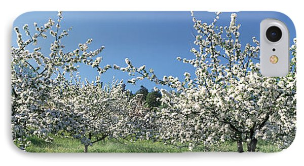 Apple Blossom Trees Norway IPhone Case by Panoramic Images