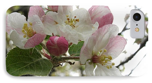 IPhone Case featuring the photograph Apple Blossoms - Wild Apple by Angie Rea