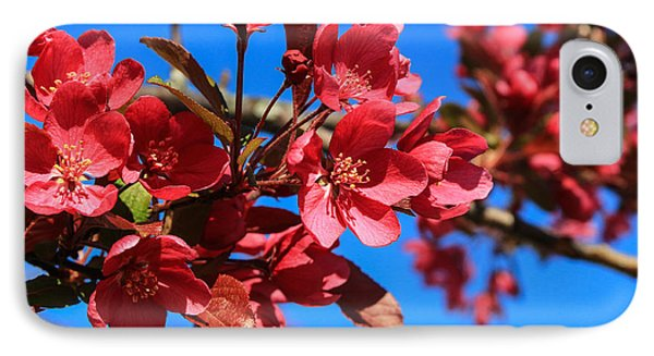 Apple Blossoms #2 IPhone Case by Laurie Breton