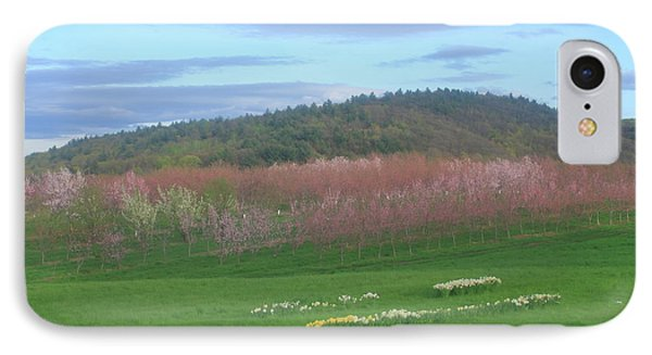 Apple Blossoms In Spring IPhone Case by John Burk