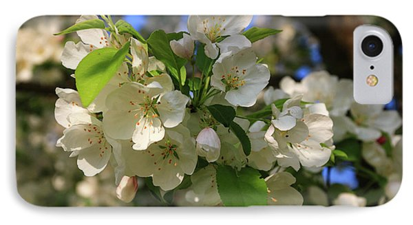Apple Blossoms  IPhone Case by Laurie Breton