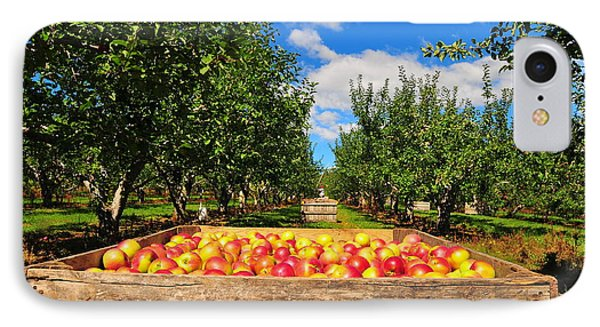 Apple Picking Season IPhone Case by Catherine Reusch Daley