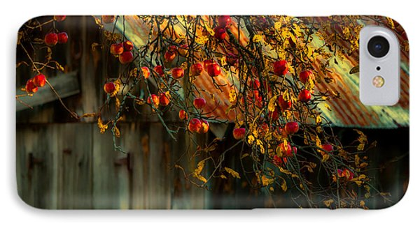 Apple Picking Time IPhone Case by Sherman Perry