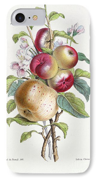 Apple Tree IPhone 7 Case