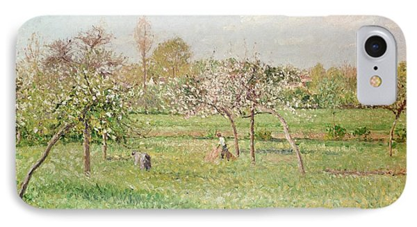 Apple Trees At Gragny IPhone Case by Camille Pissarro