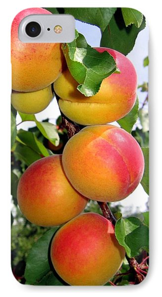 Apricots Phone Case by Will Borden