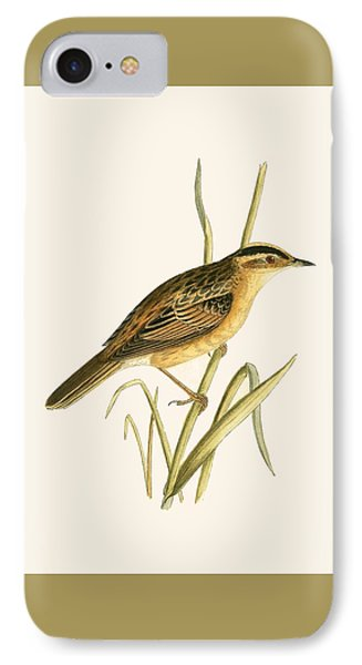 Aquatic Warbler IPhone Case by English School